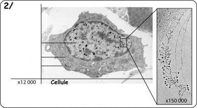 adn-cellule.jpg