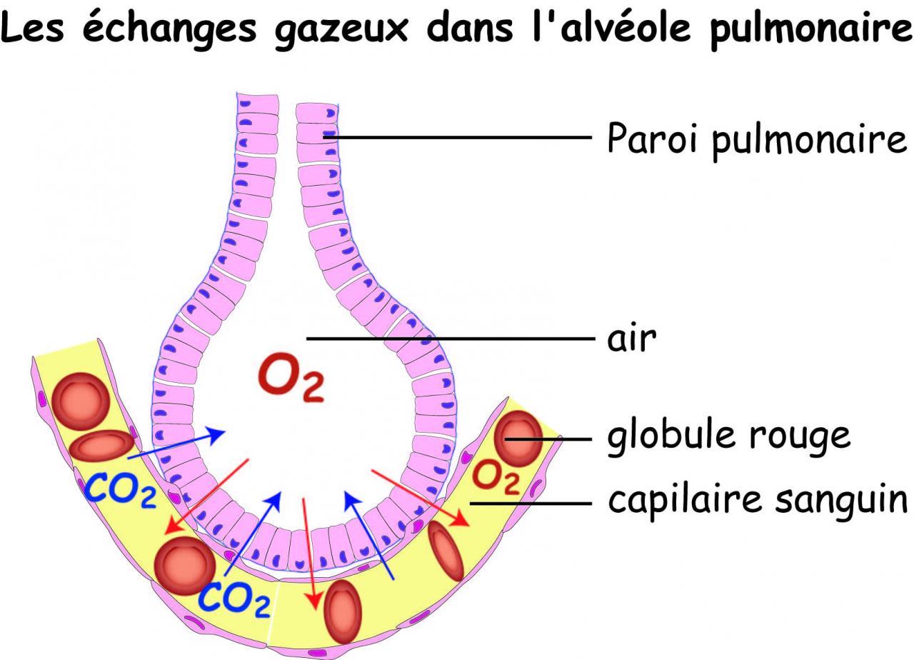 Les besoins respiratoires for Dans html