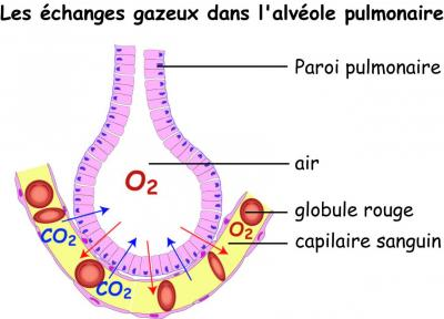 echange-alveole.jpg