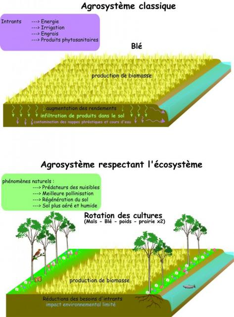 production-agricole.jpg