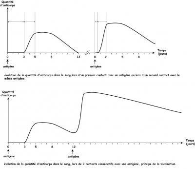 production-anticorps.jpg