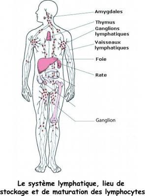 syst-lymphatique.jpg